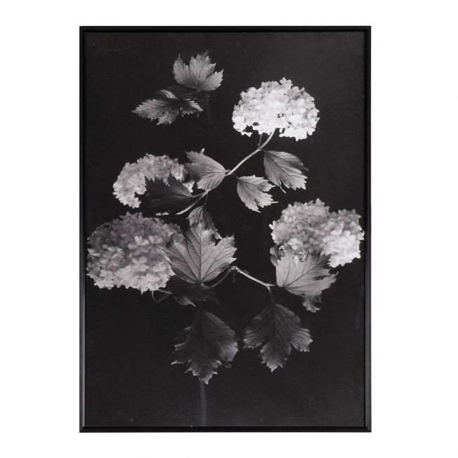 Hallowed Hydrangea Wall Art