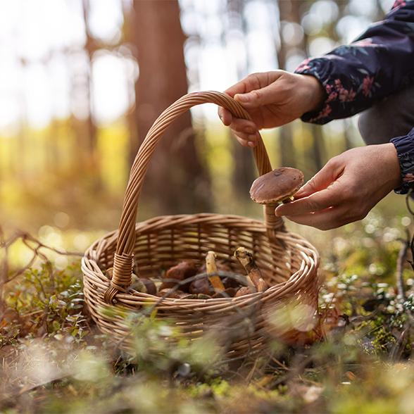 5 French Autumn Traditions