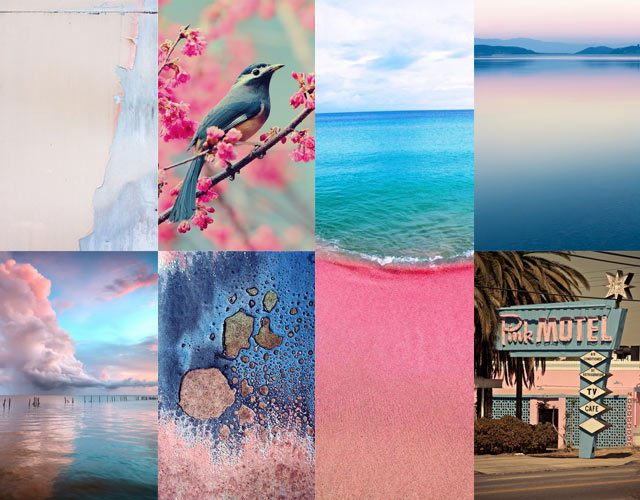 The French Bedroom Company Blog, Pantone's Colours of the Year 2016 Rose Quartz & Serenity Blue. Blush pink and blue nature and home inspiration ideas. pink and blue beach, sea, bird, flowers, motel, miami, retro sign, teal blue, ink blue